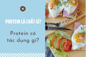 protein có tác dụng gì, protein là gì, cần bao nhiêu protein mỗi ngày, protein là chất gì, protein có chức năng gì, một ngày cần bao nhiêu protein, ăn bao nhiêu protein 1 ngày, cơ thể cần bao nhiêu protein mỗi ngày